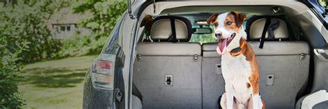 Dog Training Litchfield Ct