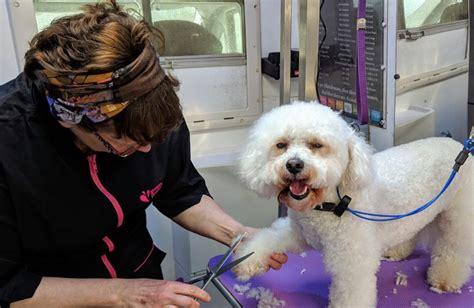 Dog Training Newcastle Emlyn