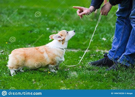 Dog Training Pembroke Ma