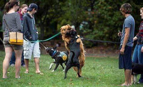 Dog Training Pullman Wa