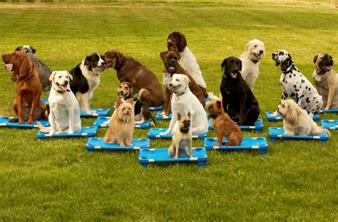 Dog Training School Cincinnati