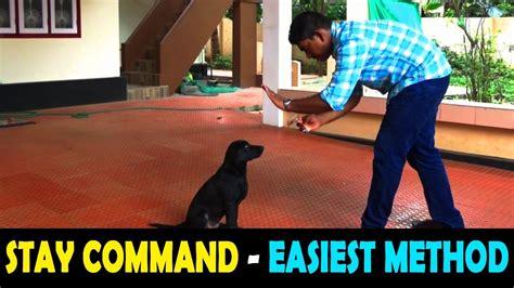 Dog Training Stay Malayalam Kerala Dog Training