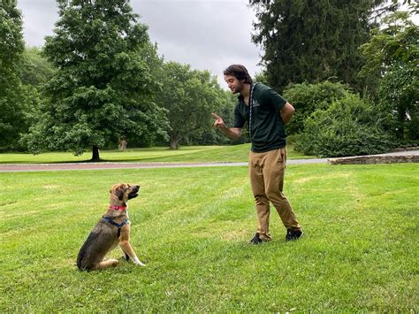 Dog Training Stay Video