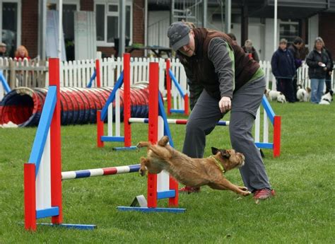 Dog Training Stockport