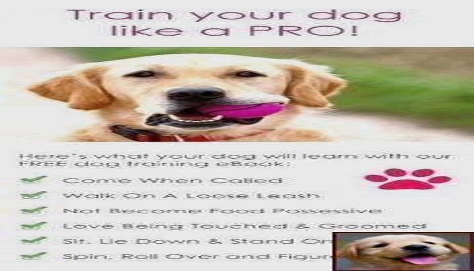 Dog Training Toronto Aggression