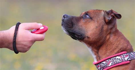 Dog Training Tricks With Clicker
