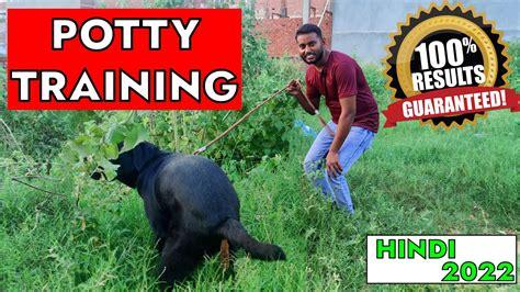 Dog Training Videos In Hindi Youtube