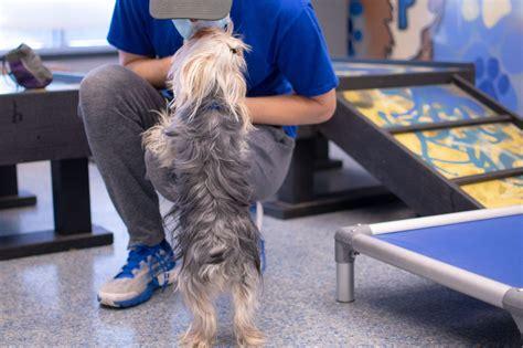 Dog Training Washington Dc Area