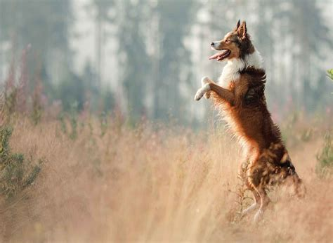Dog Walking On Two Legs Train