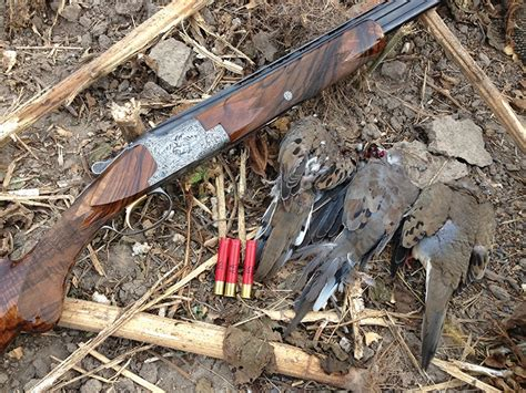 Shotgun-Question Dove Hunting With A 410 Shotgun.