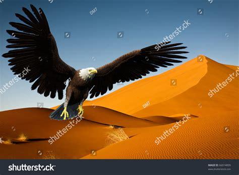 Desert-Eagle Eagle Flying Above The Desert.