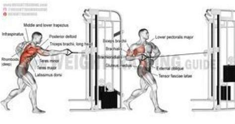 eccentric hip flexor strengthening seated cable row workout