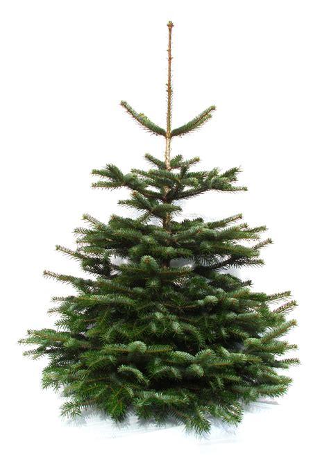 Echter Weihnachtsbaum Online Kaufen