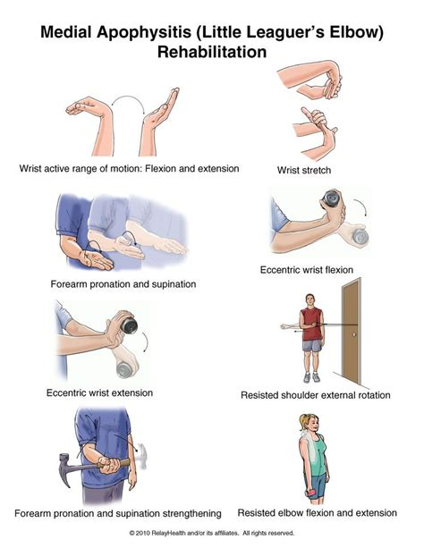 elbow flexion muscles names fitness center