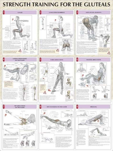 exercise to strengthen hip and buttocks muscles images png tumblr