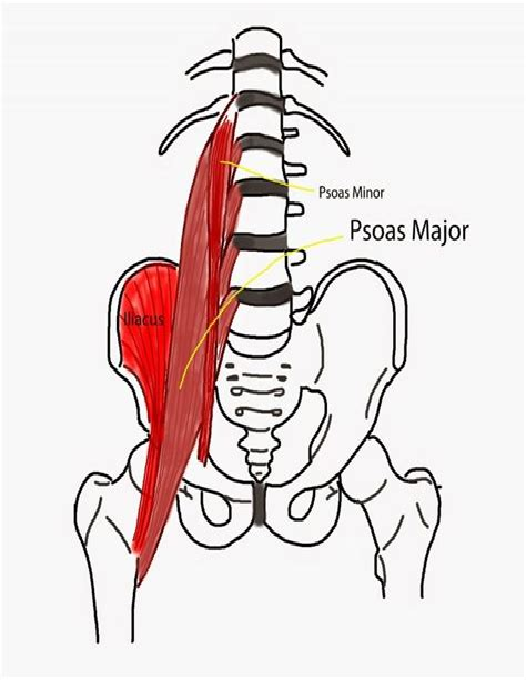 exercises for the hip flexor muscles iliopsoas pain