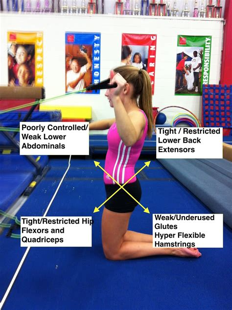 exercises for tight hip flexors and weak glutes posture now after shark