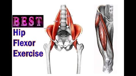 exercises for weak hip flexor muscles anatomy