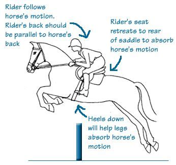 exercises to open hip flexors dressage extensions bits and pieces