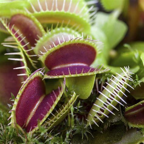 Fleischfressende Pflanzen Online