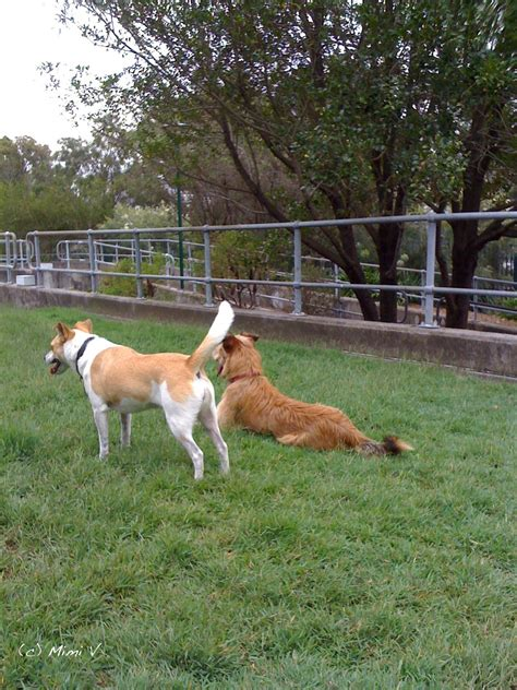 Free Dog Training Sydney