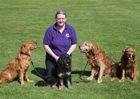 Frome Dog Training