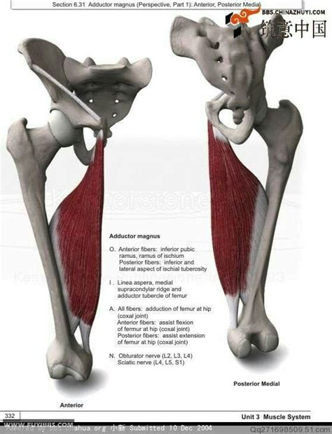 front hip flexor muscles palpation medical term