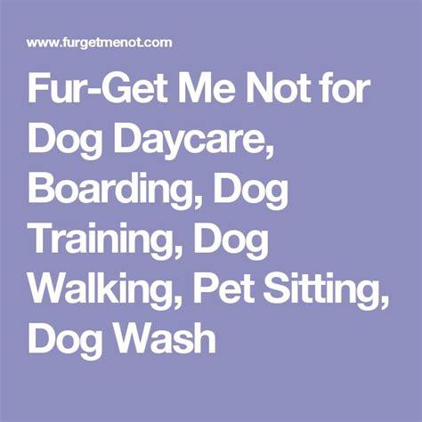 Corgi Lawyer Dog Fur Get Me Not For Dog Daycare Boarding Dog Training