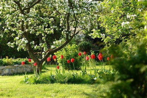 Garten Gestalten Obstbäume