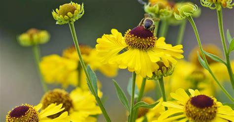 Garten Stauden Bienenfreundlich