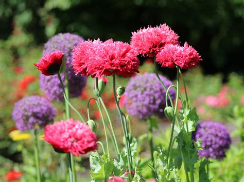 Gartenblumen Bilder Kostenlos