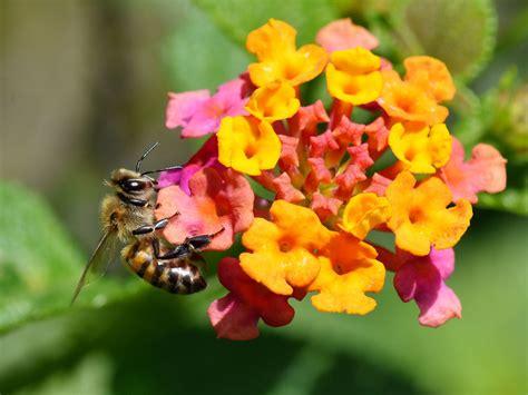 Gartenblumen Gut Für Bienen