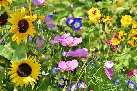 Gartenblumen Pflanzen
