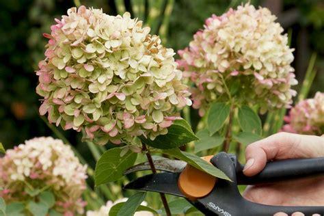 Gartenpflanzen Ohne Pflege