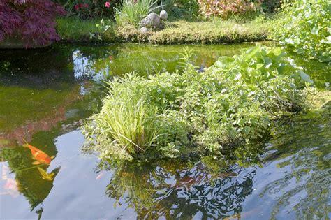 Gartenteich Leitungswasser