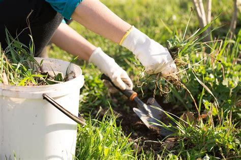 Gartentipps Gegen Unkraut