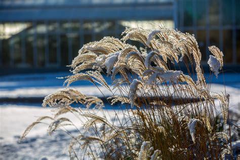 Gartentipps Winter