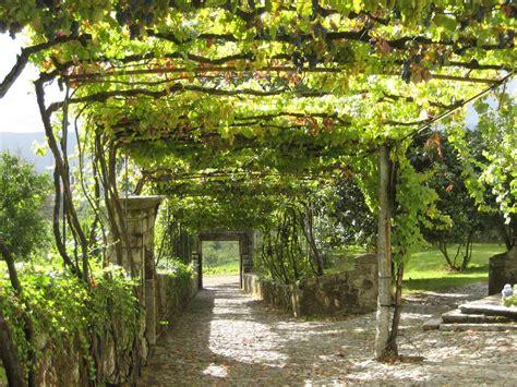 Grape Arbor Design