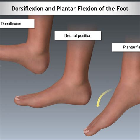 great toe plantar flexion muscles used
