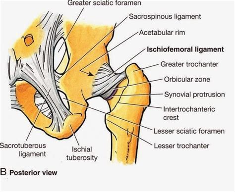 high hip pain diagrams of the human body