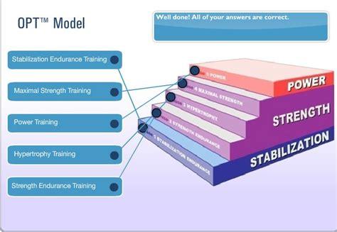 hip flexor complex nasm opt phases of labor