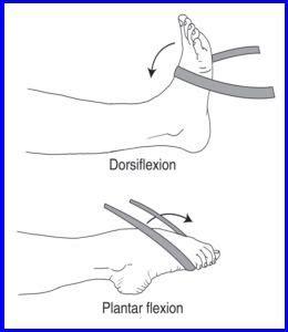 hip flexor complex stretches for plantar flexion and dorsi