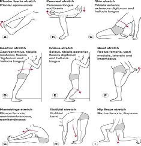 hip flexor muscle definition wikipedia francais canada