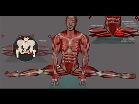 hip flexor muscle diagrams to label on earthquake night