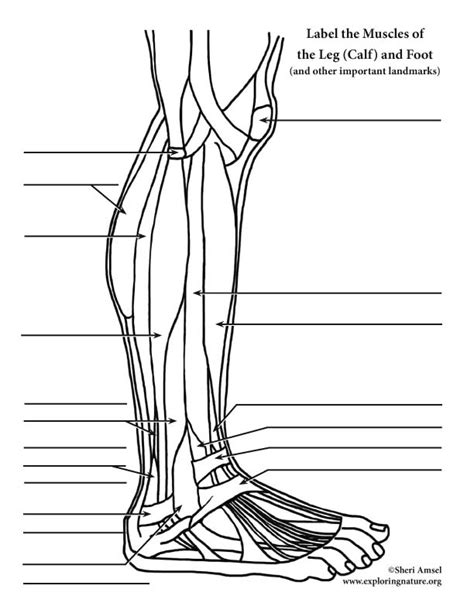 hip flexor muscle diagrams to label on earthquake safety