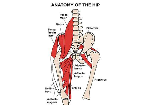 hip flexor muscle images neck body language
