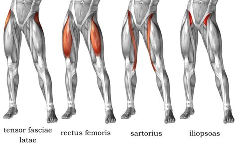 hip flexor muscles involved in pull ups