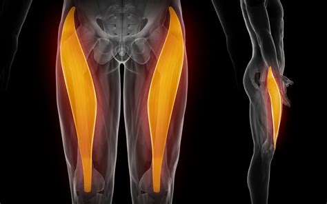 hip flexor pain from squats muscles affected in carpal tunnel