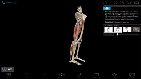 hip flexor pain when squatting down vs ducking down gif