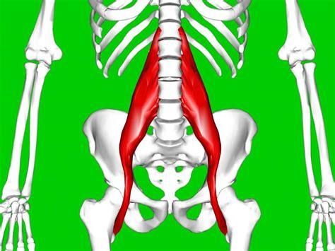 hip flexor psoas release pelvic bones images halloween